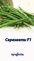 Семена фасоли Серенгети Syngenta 100 000 с